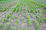 healthy ecological plantation