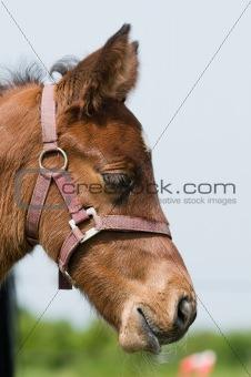 Dreamy foal