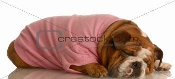 sleeping female dog