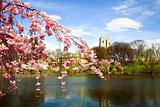 The Cherry Blossom Festival in New Jersey