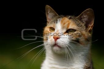 Cats head