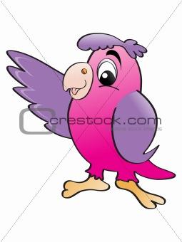 beautiful color parrot