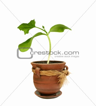 Small plant in a clay pot