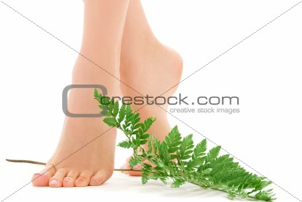 female feet with green leaf