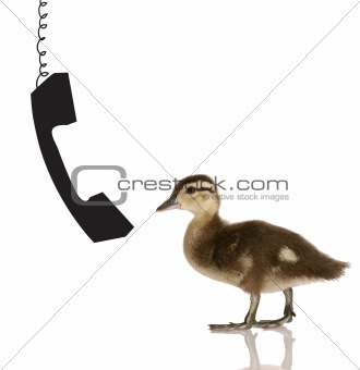 baby duck talking on the phone