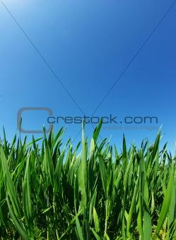 lawn on sky