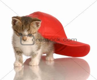 kitten playing under baseball cap