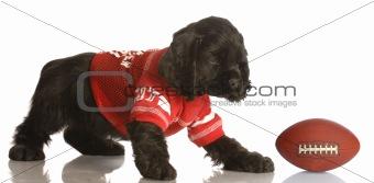 football hound