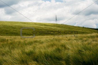 Wind over wheat field