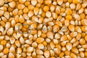 Background of corn kernels