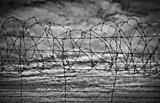 restrictions barbed wire black and white