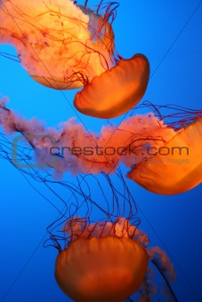 Glowing Orange Jellies