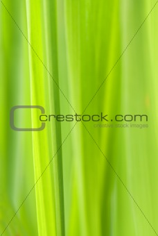 Green vertical abstract