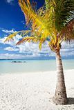 Palm tree on a deserted tropical beach