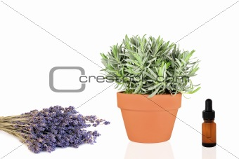 Lavender Herb Products