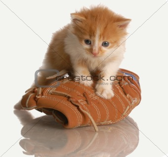 kitten playing with baseball glove