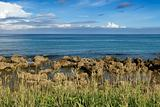 coral reef rock coastline with grass