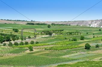 agricultiral landscape