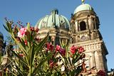 Berlin Cathedral through the flowers