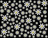 Flower background black white