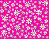 Flower background pink white