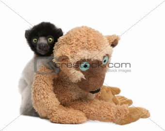 young Crowned Sifaka with his teddy bear  - Propithecus coronatu