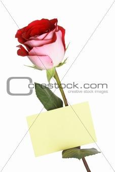 Greetings Rose