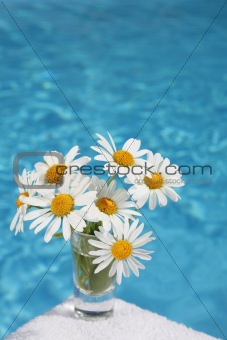 Daisies by Blue Water