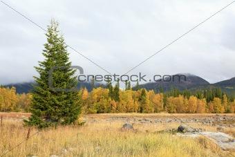 Autumn landscape with a fir