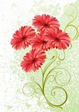 gerbera floral background