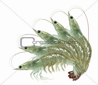 five shrimps