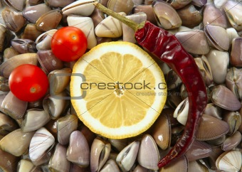 Clams with tomato, chili and lemon, seafood
