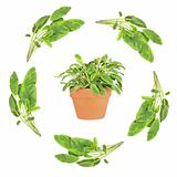 Sage Herb Leaf Garland