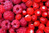 raspberries and wild strawberry