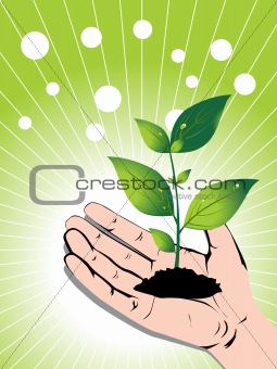 growing green plant in a hand, vector