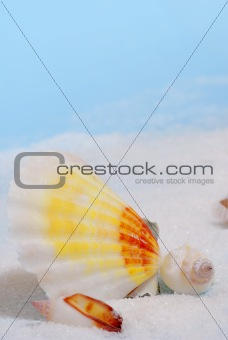 Three seashells on white sand