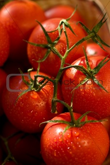 tomato,
