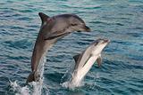 Dolphin Bow Jump