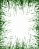 Green grass border