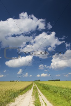 an empty road through fresh green fields in summer with a blue sky