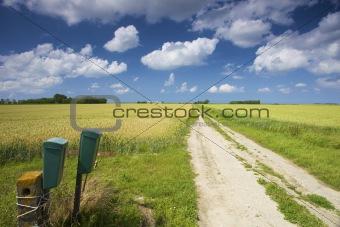 an empty road through green fields in summer