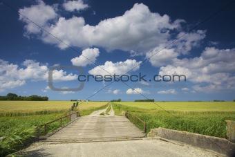 an empty dirt road through fresh green fields in summer
