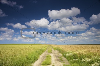 an empty road through fresh green fields in summer