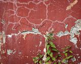 Old wall with cracks and nettle runaways