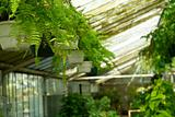 View of Greenhouse Plants at Nursery