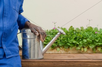 Stainless Steel Watering Can Used for Gardening