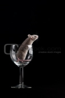 mouse in glass 