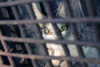 Cat in a cage.