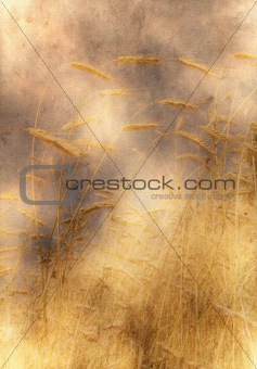 old yellow paper background with wheat