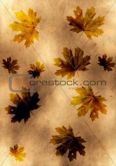 old yellow paper background with maple leaves